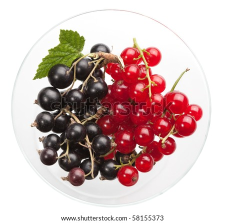 Black and red berry in vase isolated on white - stock photo