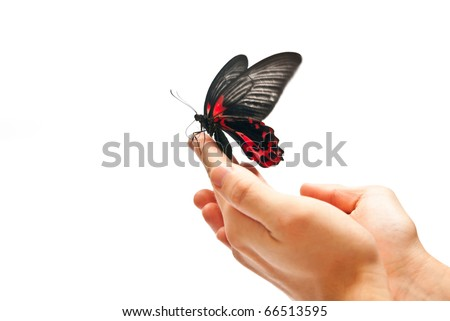 Black and red butterfly on man's hand. In motion