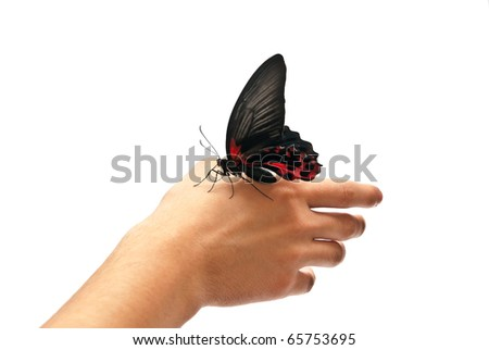 Black and red butterfly on man's hand. Isolated on white - stock photo
