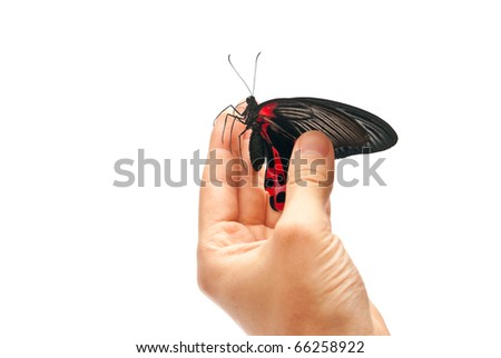 Black and red butterfly on man's hand. Isolated on white