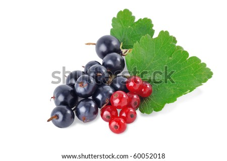 Black and red currants on a white background - stock photo