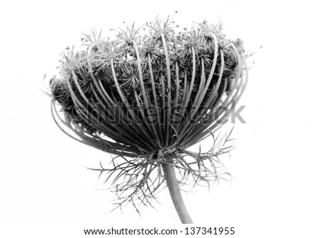 Black and white abstract flower background - stock photo