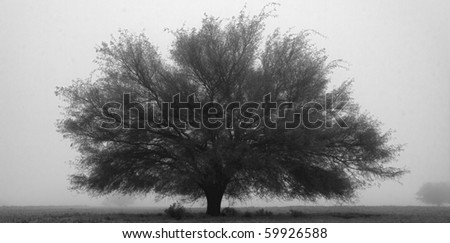 Black and white abstract of tree in fog - stock photo