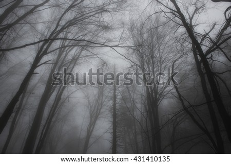 black and white autumn forest