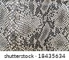black and white background in snake pattern style - stock photo