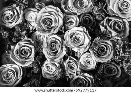 Black and white background of flowers roses