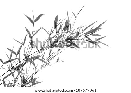 Black and white, Bamboo leaves - stock photo