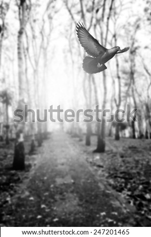 black and white  bird flying in woodland   for background - stock photo