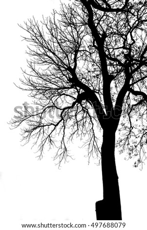 black and white branches of tree silhouette on white background, vertical and isolated