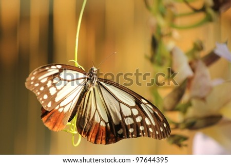 Black and white butterfly on leaf - stock photo