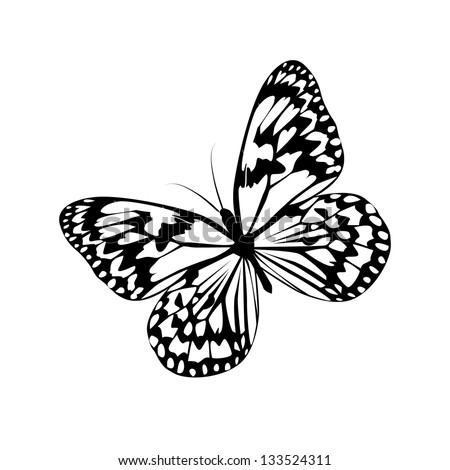 Black and white butterfly. Raster.