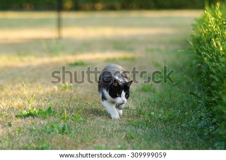 black and white cat during hunting