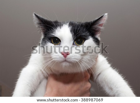 Black and white cat hanging on hand