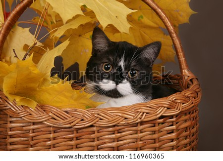 Black and white cat in a basket with yellow leaves - stock photo