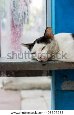 Black and white cat in blue phone box