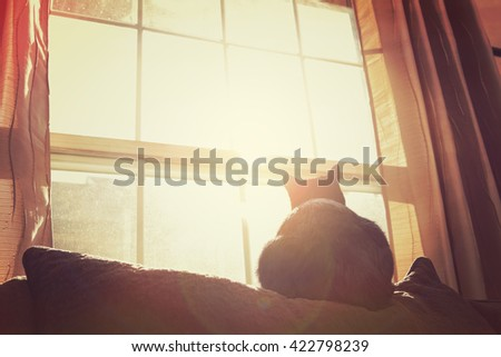 Black and White cat  in the sun on top of a couch in the late afternoon sun.  Instagram toned - stock photo