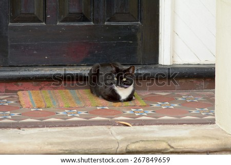 Black and white cat laying on mat outside house - stock photo