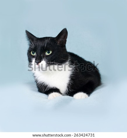 Black and white cat lying on blue background