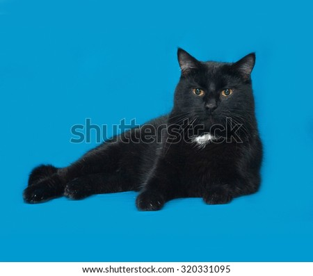 Black and white cat lying on blue background - stock photo