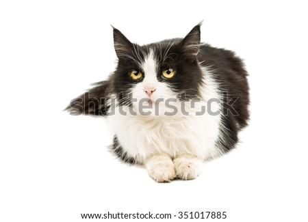 black and white cat on a white background - stock photo