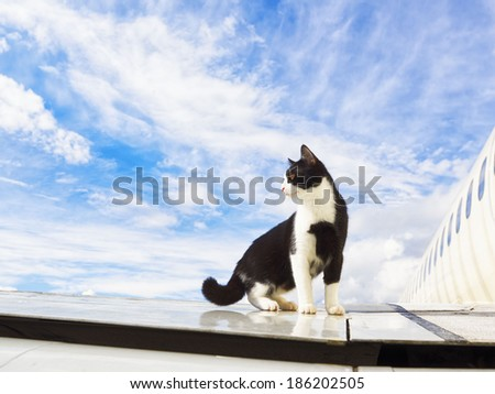 black and white cat on an airplane - stock photo