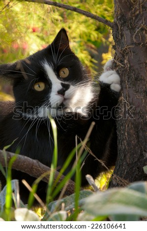 black and white cat sharpening its claws on a tree - stock photo