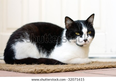 black and white cat sitting on a door carpet