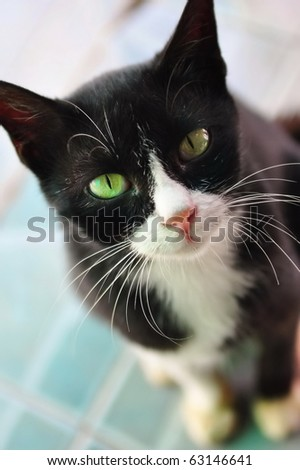 Black and white cat waiting patiently for its food - stock photo