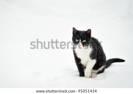 Black and white cat walking in the snow. - stock photo