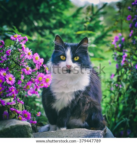 Black and white cat with orange eyes sitting in flowers