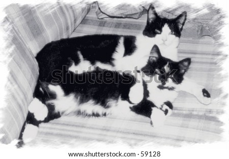 Black and White Cats - stock photo