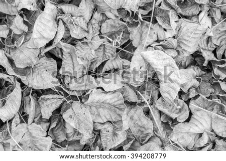 black and white closeup autumn dry leaves,Dead leaves shot ideal for backgrounds and textures ,warm tone,selective focus. - stock photo