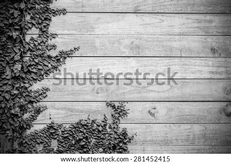 Black and white color of fresh spring green grass and leaf plant over wood fence background - stock photo