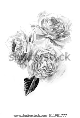 Black And White Contour Drawing Of Rose Bunch Blooming Roses Pencil Drawn By Hand