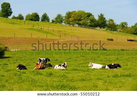 Black and white cows in landscape with pastures - stock photo
