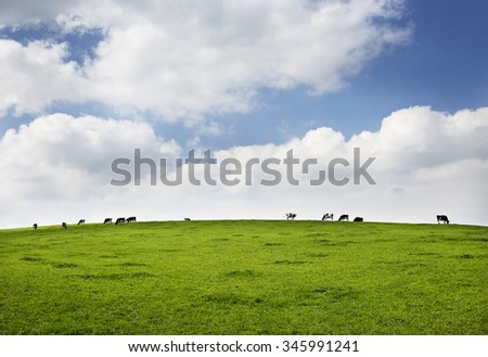 Black and white cows on a hill with clouds in the sky.