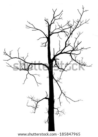 Black and white dead tree with no leaves in isolated background - stock photo