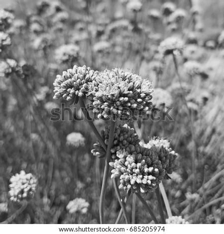 Black white desert flowers stock photo edit now 685205974 black and white desert flowers mightylinksfo