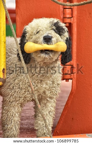 black and white dog bone in mouth - stock photo