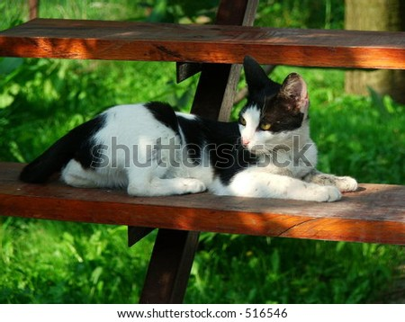 Black and white domestic cat on the stairs