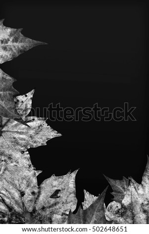 Black And White Dry Maple Leaves On Black Background