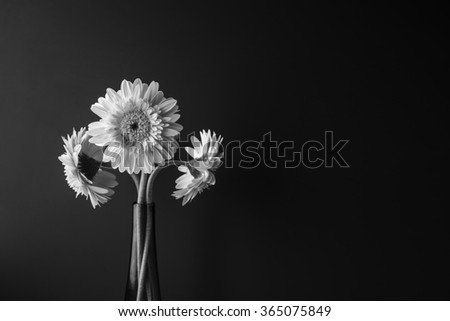 black and white flower in bloom over black background - stock photo