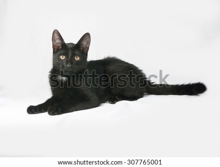 Black and white fluffy kitten lies on gray background