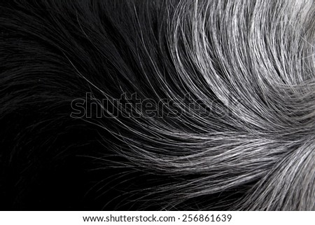 Black and white fur close-up