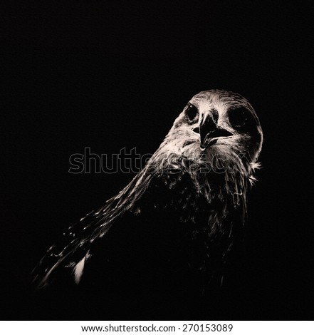 Black and white hawk on canvas. - stock photo