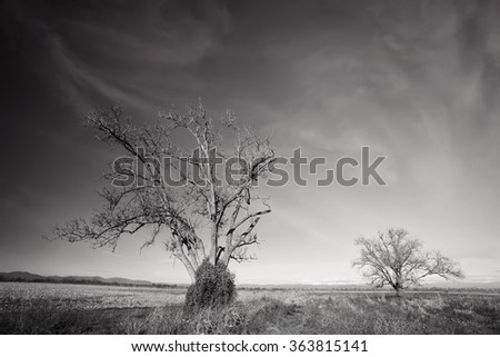 black and white high contrasted landscape with desert trees  - stock photo