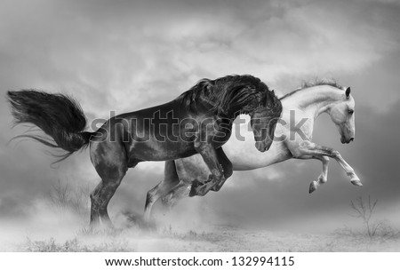 black and white horses - stock photo