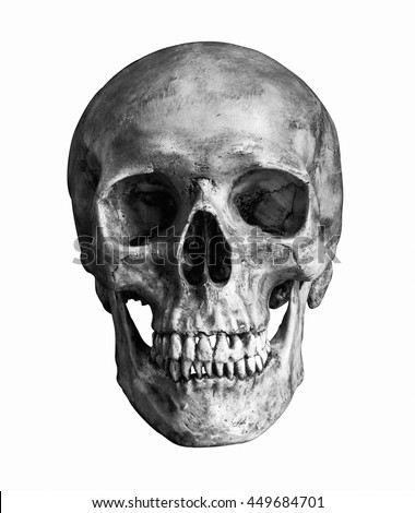 Black and White Human skull, isolated on white background with clipping path - stock photo