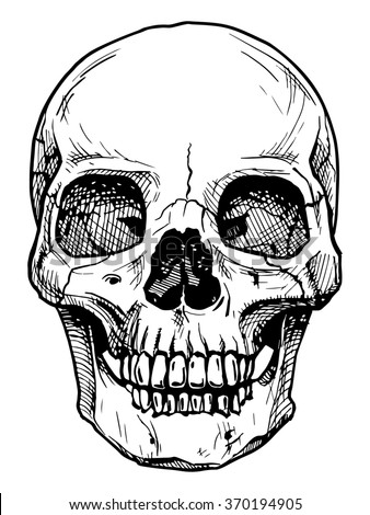 black and white illustration of  human skull with a lower jaw in ink hand drawn style. - stock photo