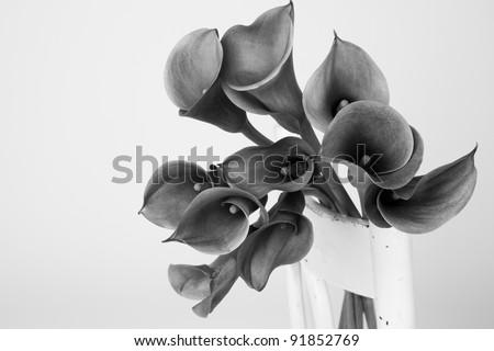 Black and white image of a bouquet of Calla lily(Zantedeschia) - stock photo